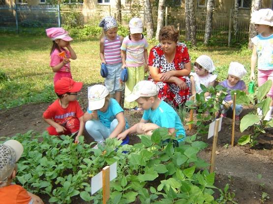 Огород в детском саду.  Летом огород - что город.  В нем сто тысяч горожан: Помидор, горох, капуста...