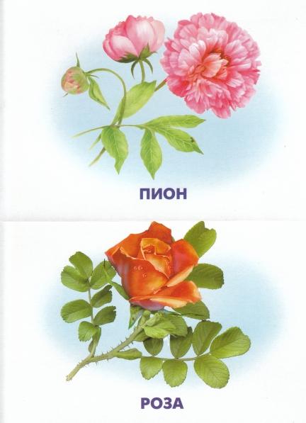Разрезные цветы картинки для детей