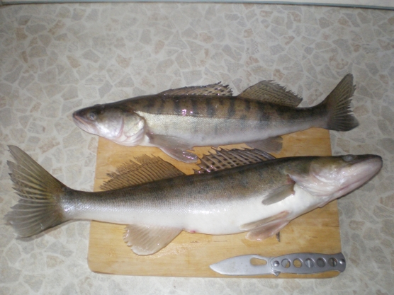 ответы пять рыбаков