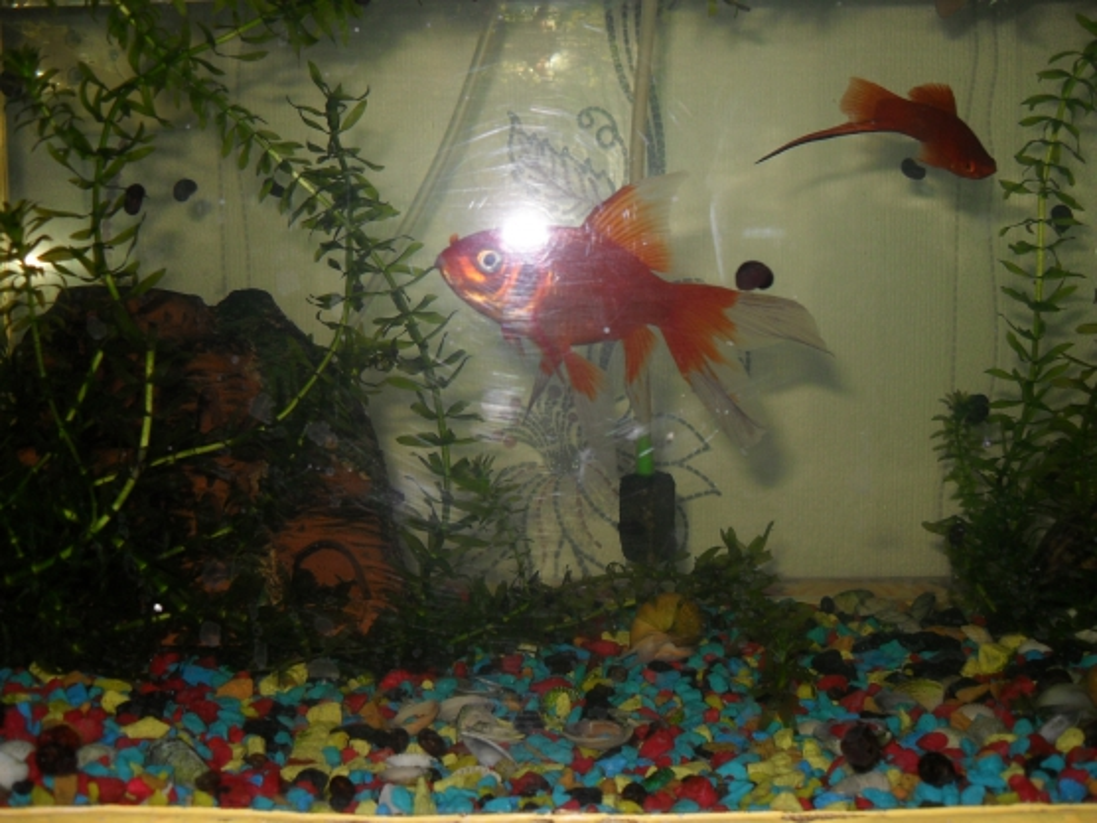 С аквариумом знакомства