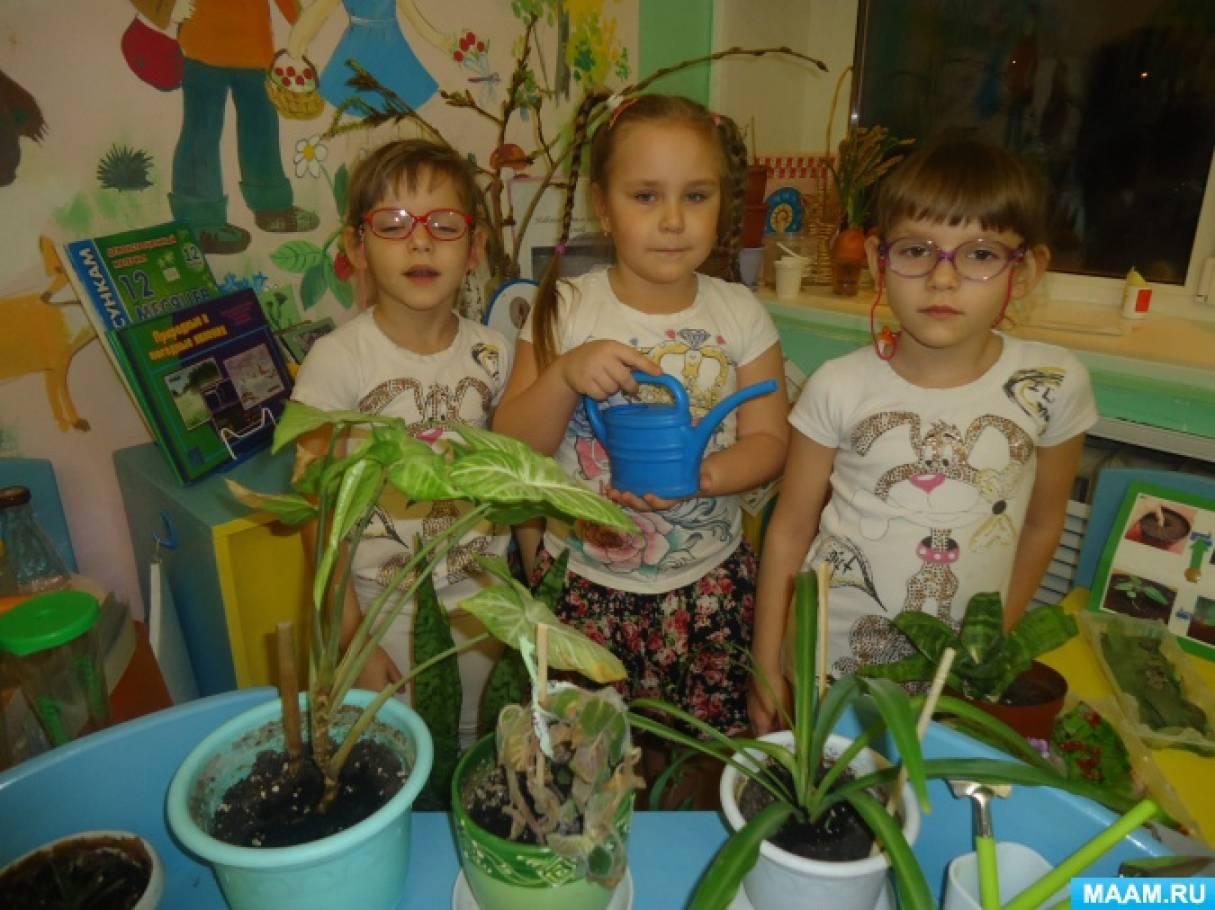 Конспект занятия-беседы «Комнатные растения» в средней группе