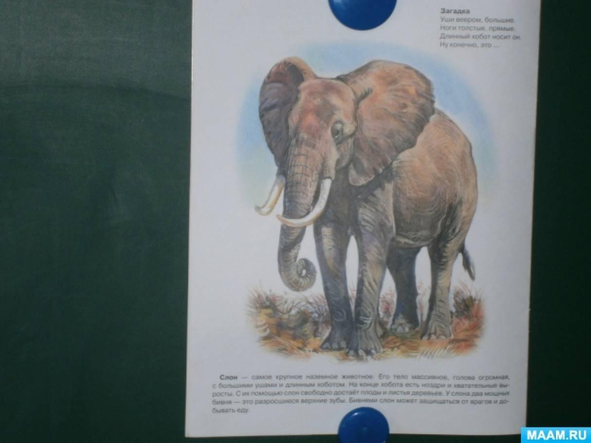 Поделка «Слон из спичечных коробков».