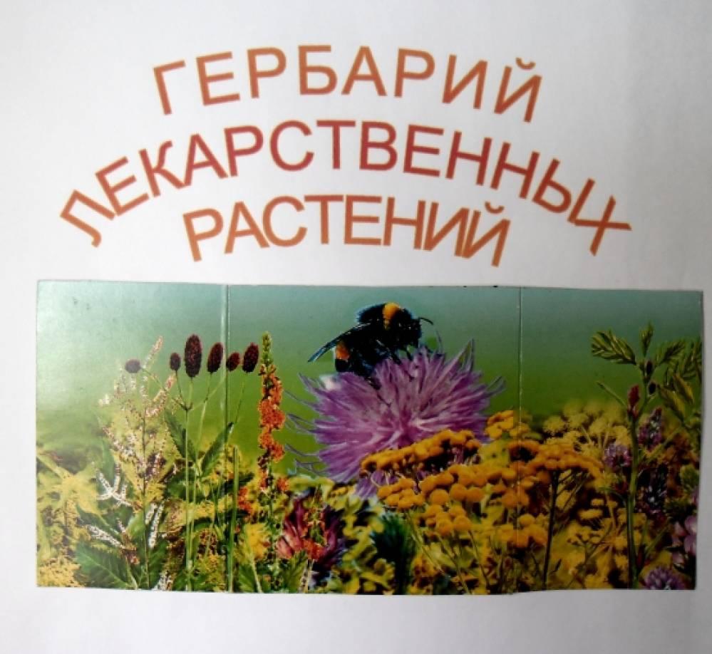 Гербарий лекарственных растений для школы