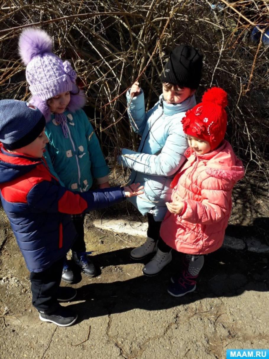 Конспект весенней прогулки в старшей группе детского сада «Наблюдение за деревьями»