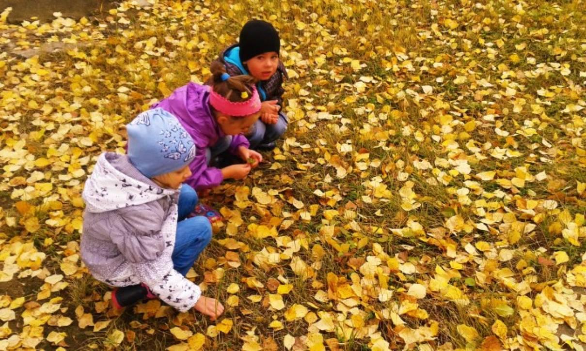 консультация для родителей как знакомить детей с деревьями