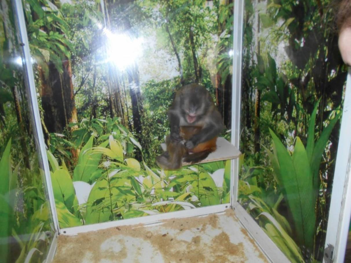 На выставке обезьян (фотоотчет)