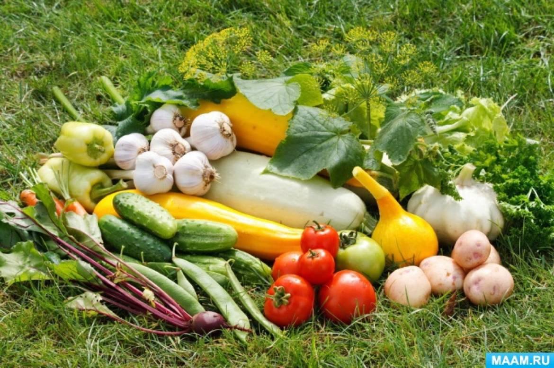 Экологический проект в детском саду «Вместе сеем огород и посмотрим, что растёт!» Видео