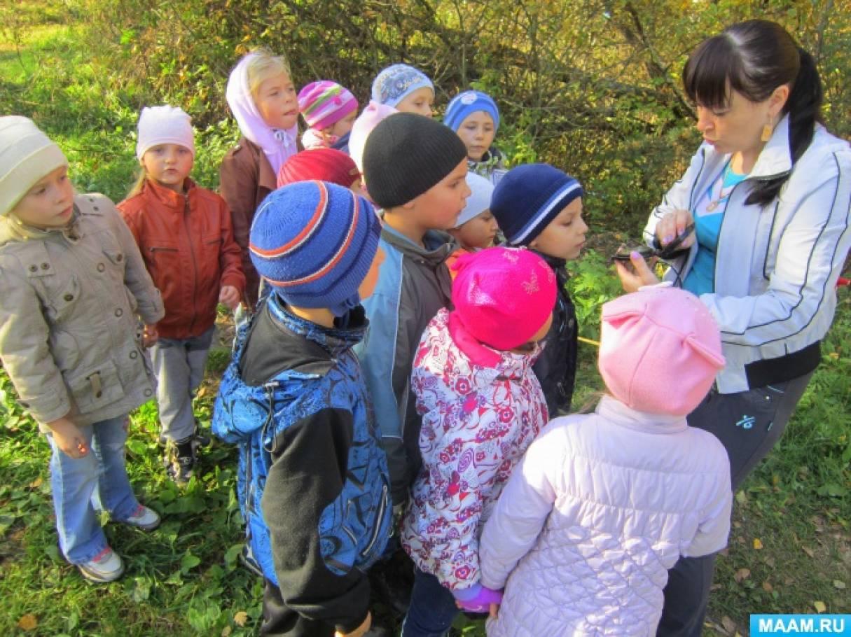 «Осень в сосновом бору». Туристическая прогулка (октябрь)