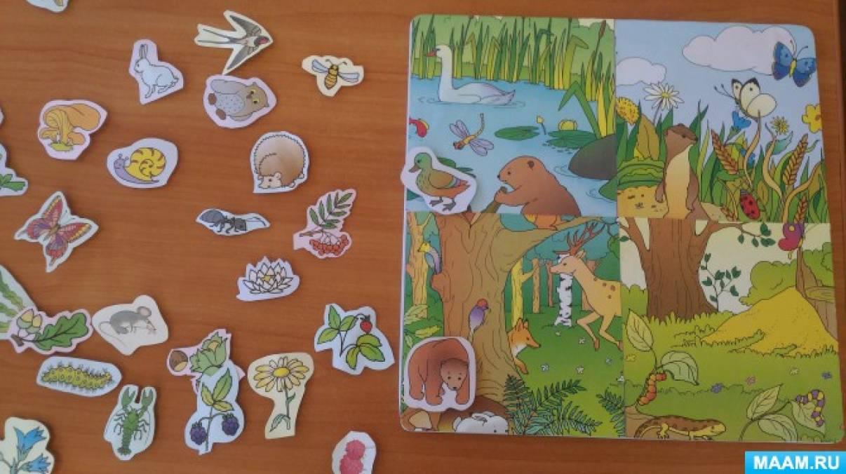Картинки по экологии для старшей группы