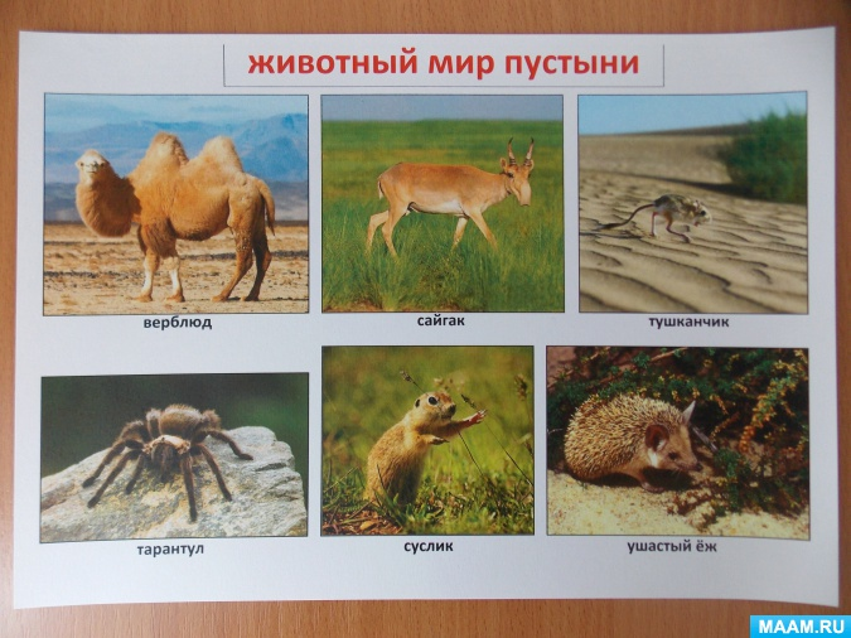 картинки животных и растений природных зон позволяет добавлять папки