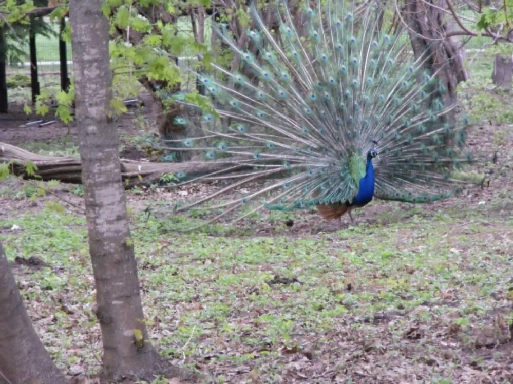 Выходной в ботаническом саду