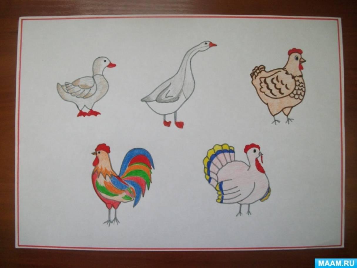 Конспект занятия по развитию речи «Домашние птицы» для детей младшего дошкольного возраста