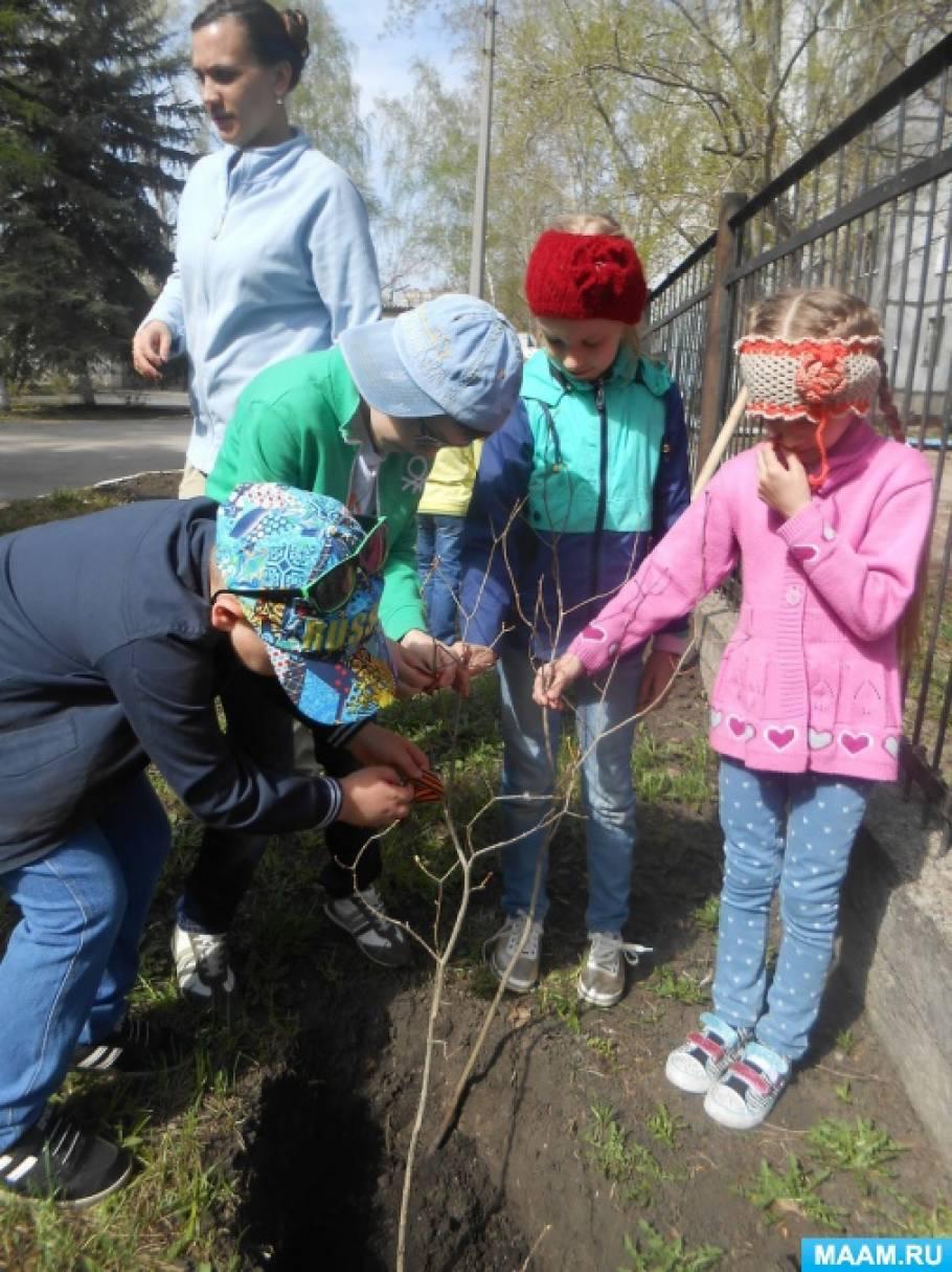 Совместная работа воспитателя и детей в подготовительной группе «Посадим дерево. Сирень Победы»