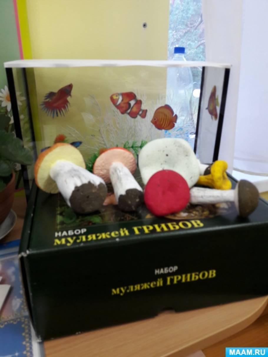 Конспект занятия по лепке «Съедобные грибы»
