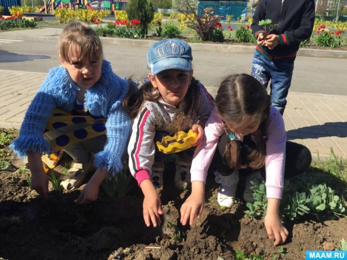 Фотоотчет об экологическом проекте «Выращиваем бархатцы»