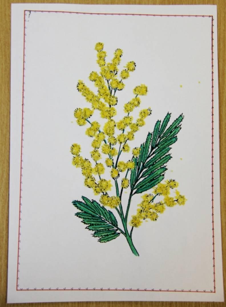 Добрыми, открытка мимоза своими руками в детском саду