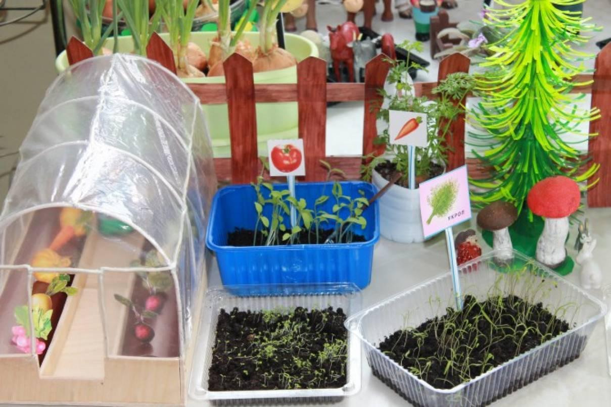 Сад и огород своими руками в детском саду 202