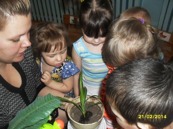 конспект занятия по экологии в младшей группе знакомство с растениями