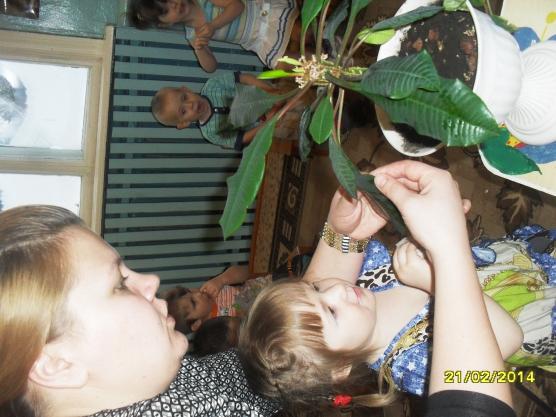 конспект занятия знакомство с комнатными растениями младшая группа