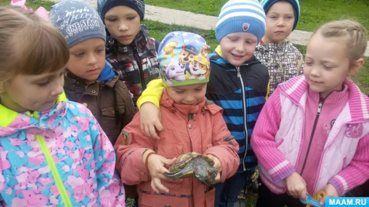 Наблюдение с детьми старшей группы «Знакомство с черепахой»