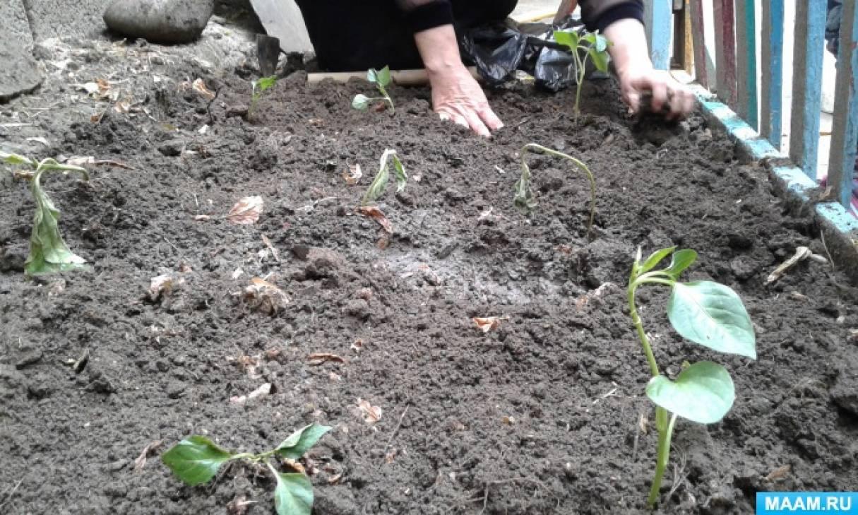 Конспект занятия по трудовой деятельности «Сажаем рассаду в огороде»