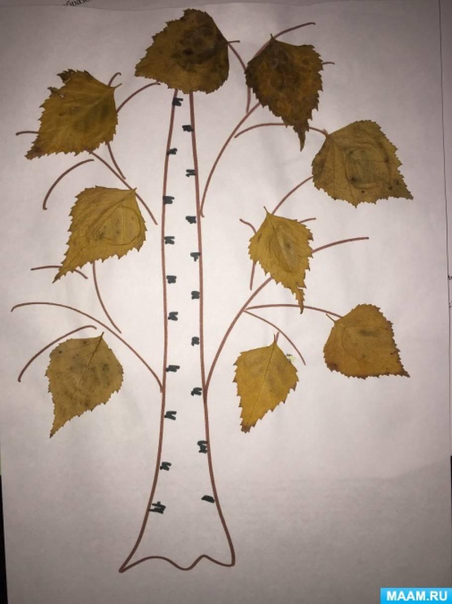Конспект занятия по аппликации «Осенняя берёзка»