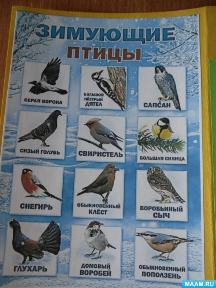 лэпбук зимующие птицы картинки с названиями наиболее чувствительных зон