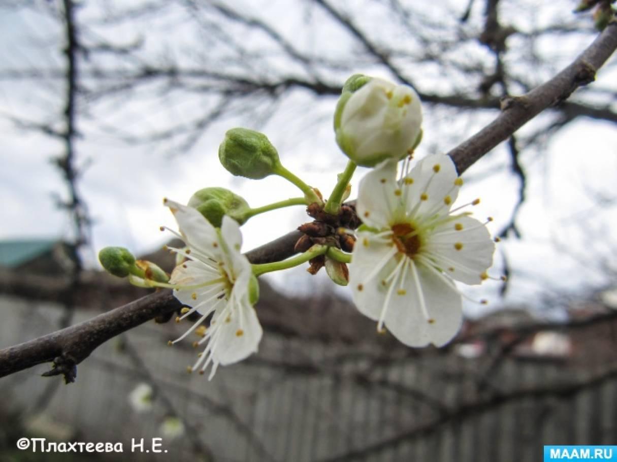 Зимой на Кубани зацвели деревья и цветы