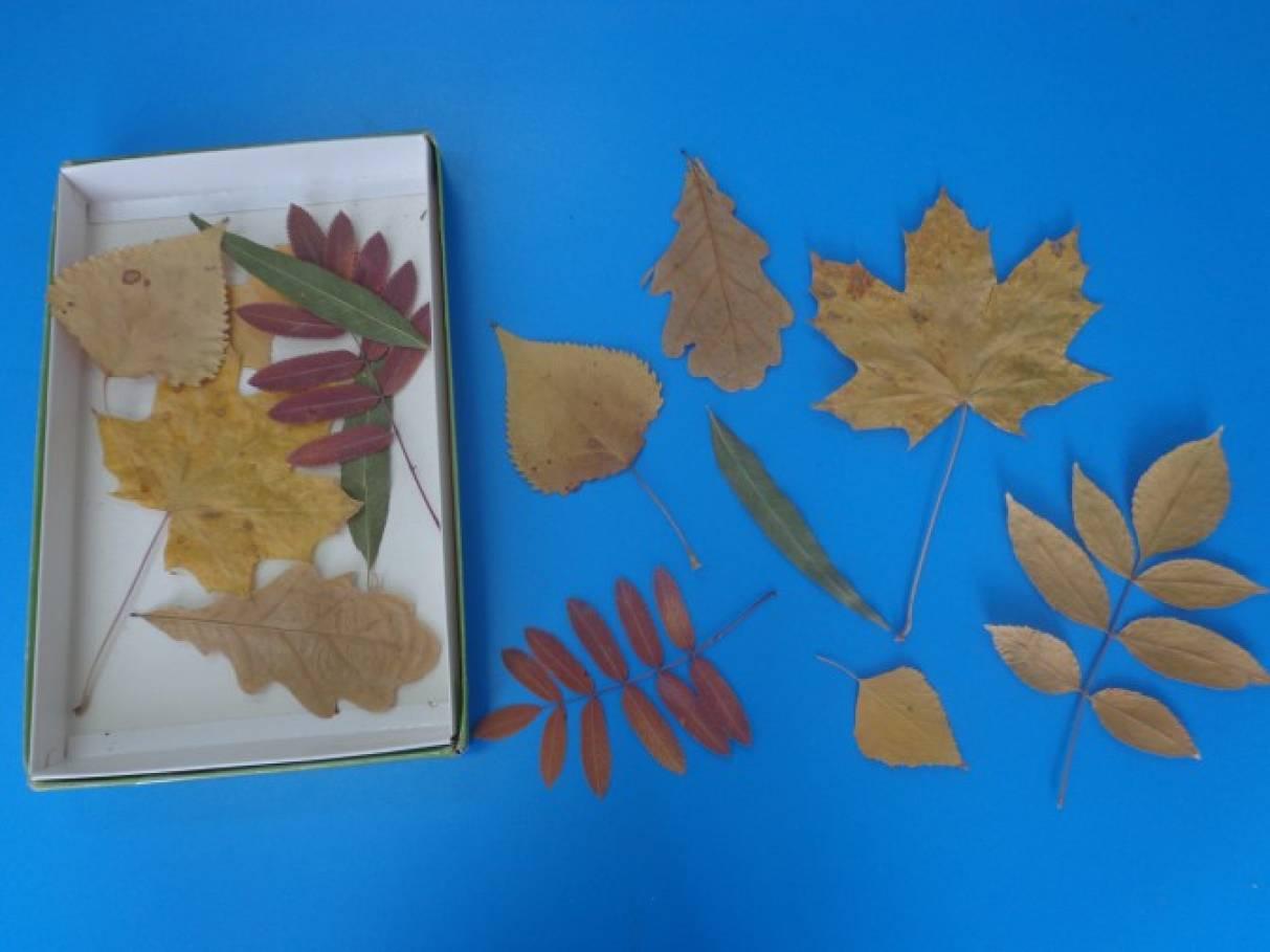 План конспект по изо осенние листья
