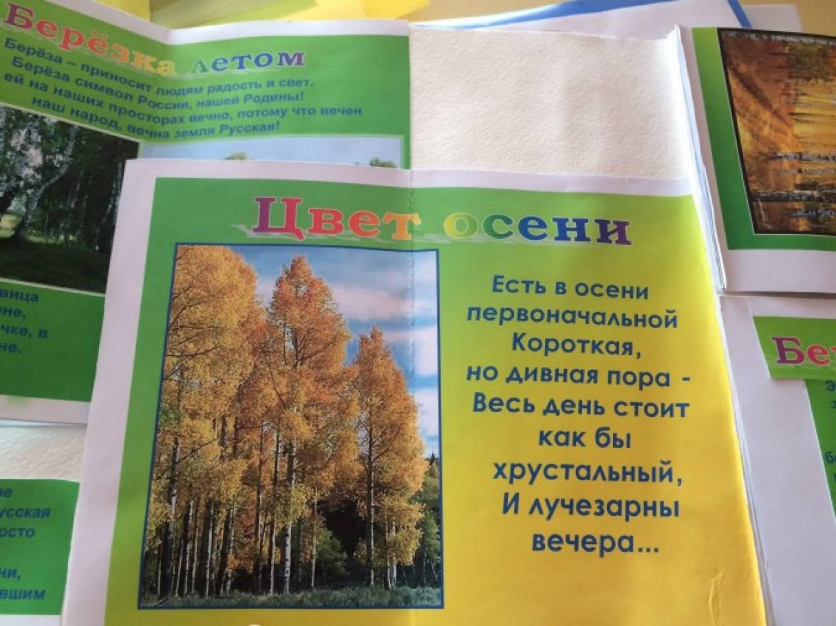 знакомство с деревом старшая группа