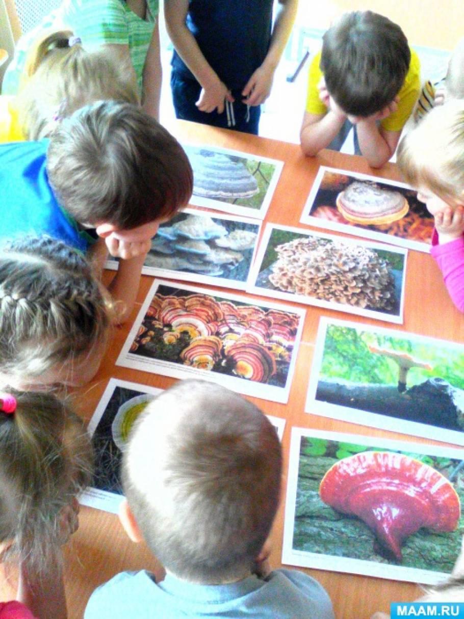 Исследовательская работа «Грибы-паразиты на деревьях и их влияние на них». Проект