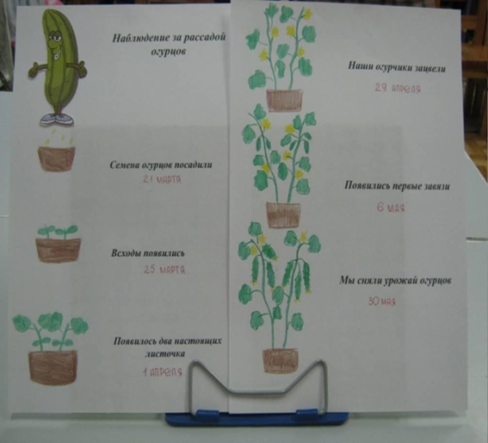 дневник наблюдений за растениями в детском саду