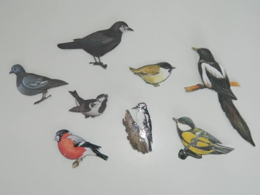 Зимующие птицы в кормушке картинки