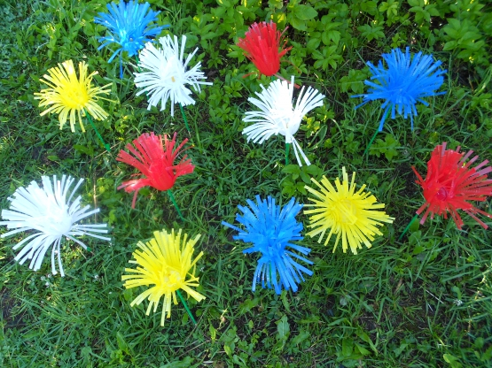 Астры из пластиковых стаканчиков