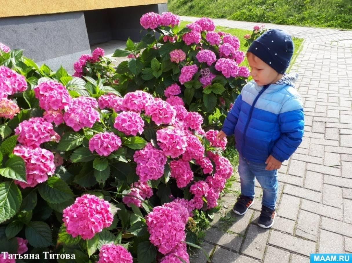 Конспект образовательной деятельности «Выросли цветы» для детей раннего дошкольного возраста