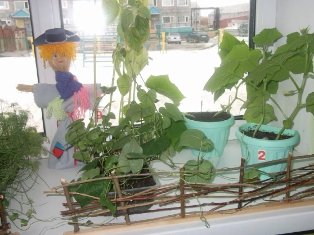 Огород на подоконнике фото