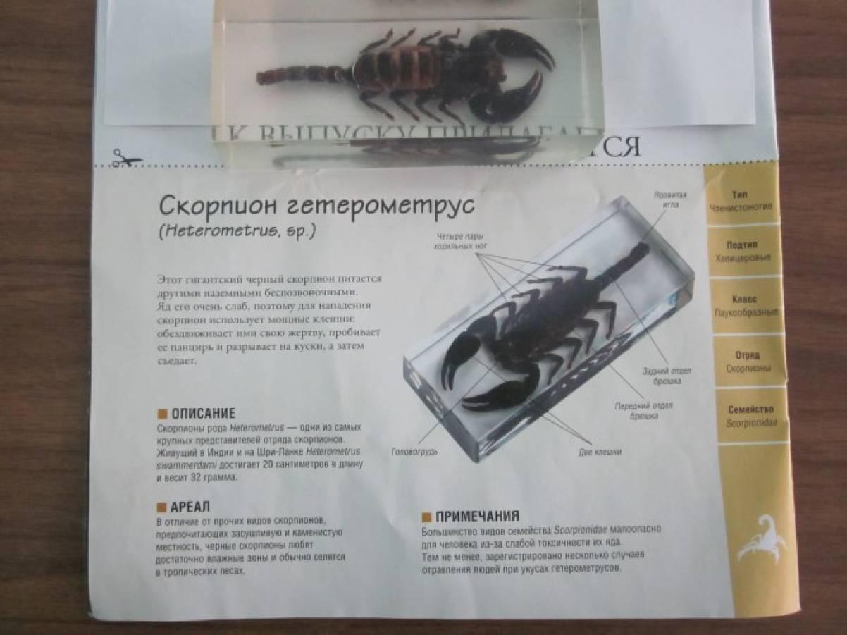где лучше знакомится скорпионам