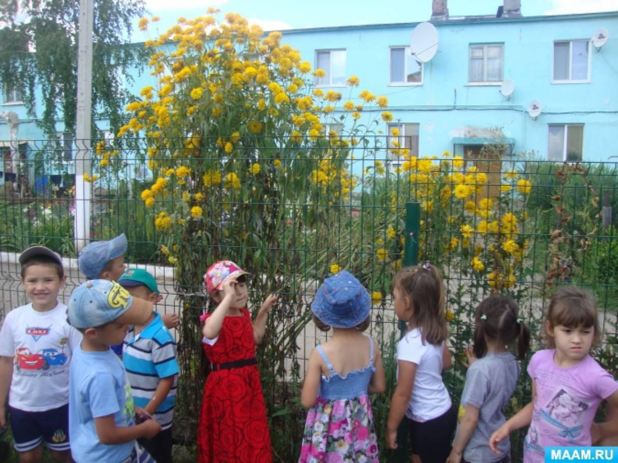 Наблюдение за цветами на клумбе цель
