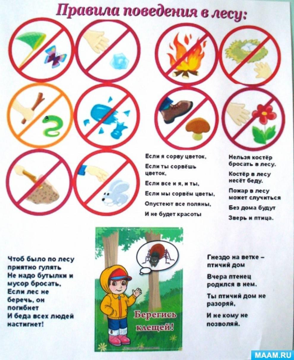 Памятка поведения в лесу для детей в картинках