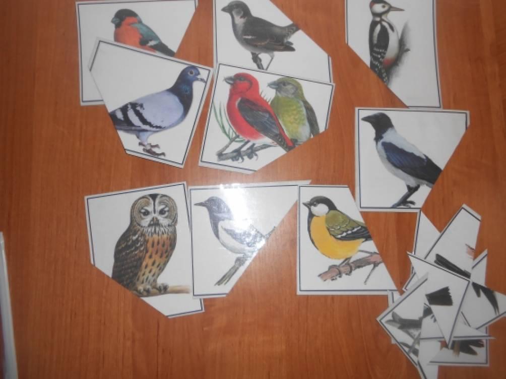игры птицы