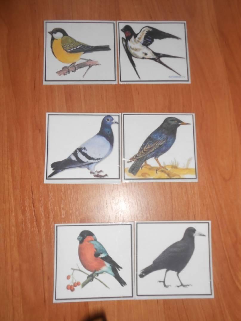 Тема птицы в старшей группе картинки