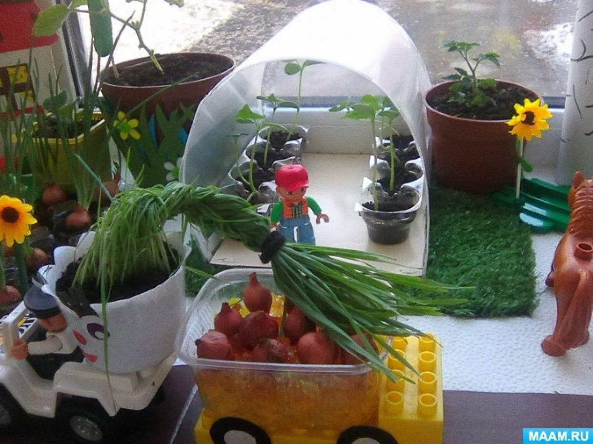 первый огород на подоконнике картинки для оформления яблок округлая