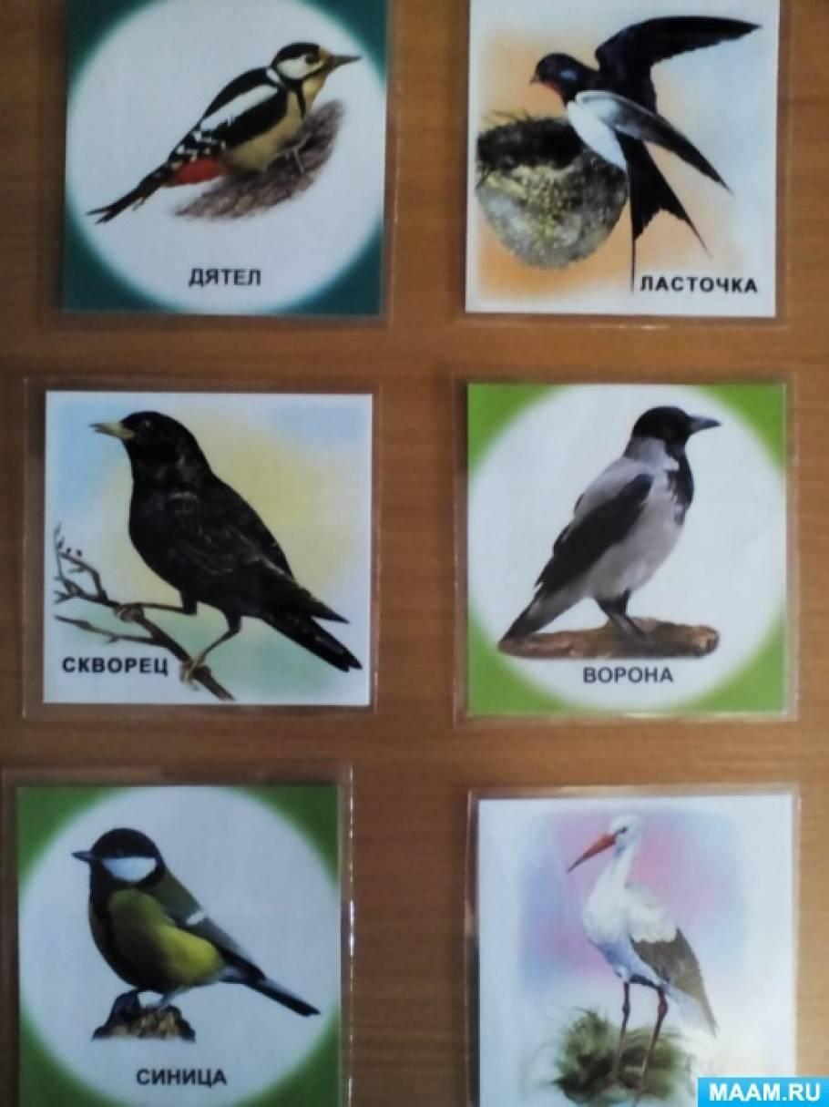 Видео и музыкальная игра для осеннего праздника «Перелётные и зимующие птицы» в подготовительной группе ДОУ