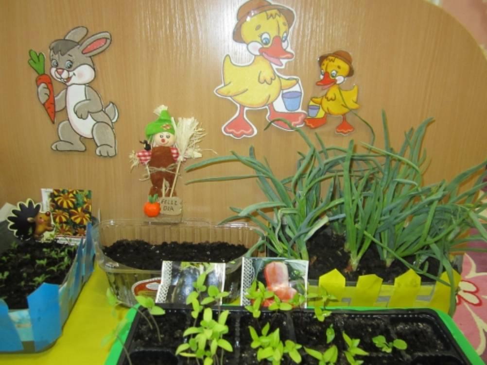 «Детский сад для лука