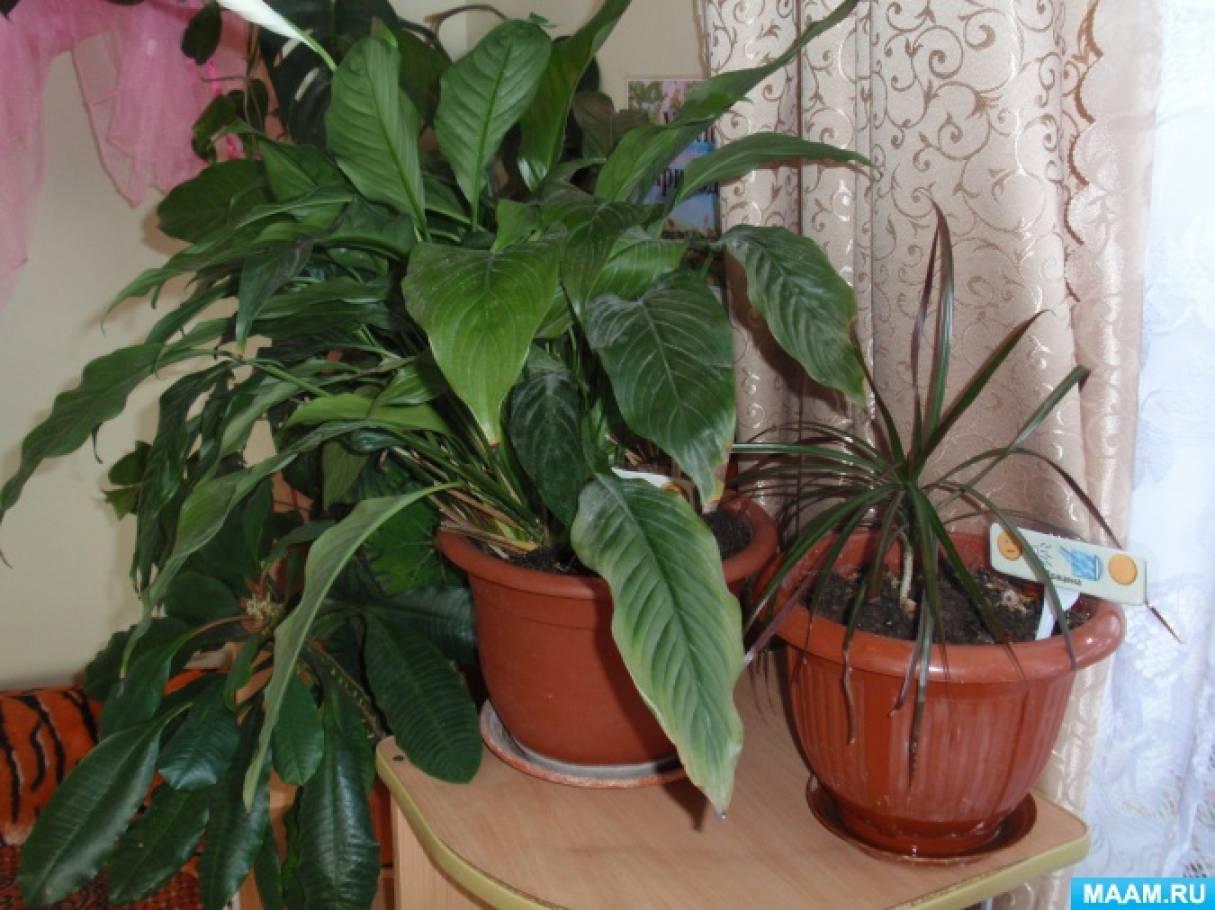 Картинки комнатных растений для младшей группы 10