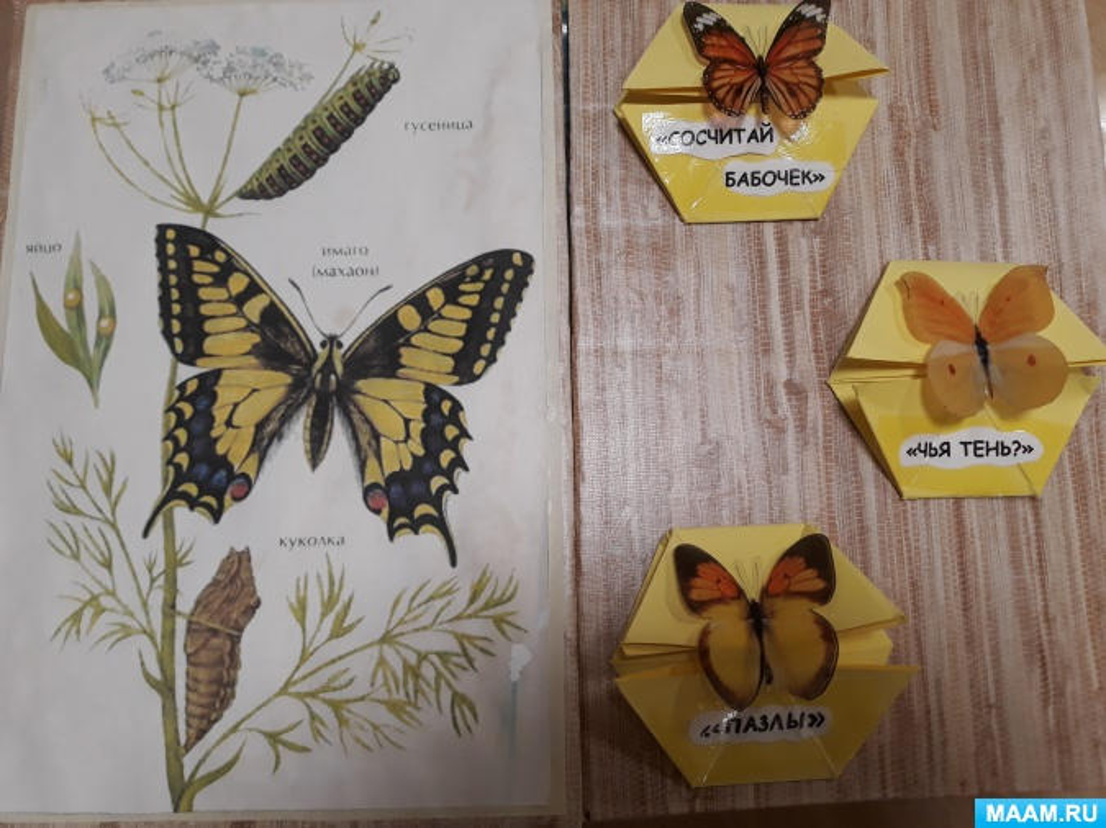 Лэпбук «Всё о бабочках»