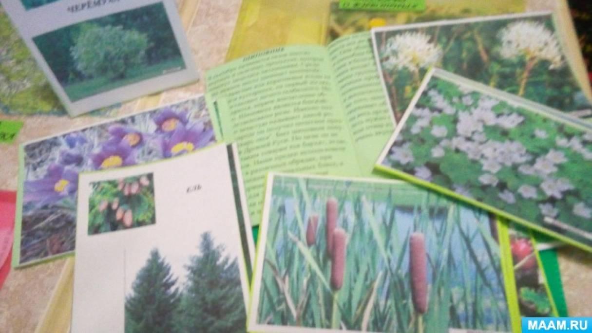 знакомство с лекарственными растениями в детском саду