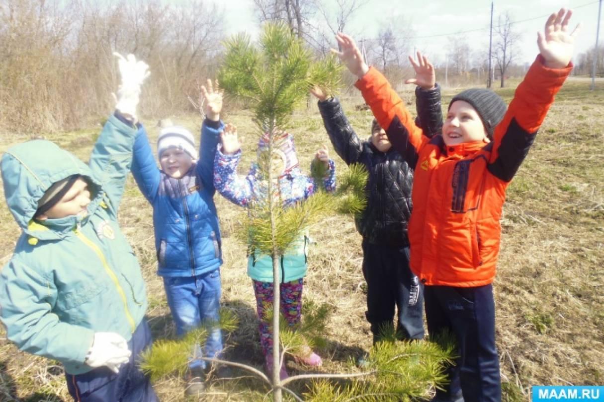 Экологический проект «Сосна-дерево жизни»