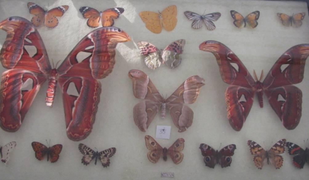 ребята ловили для жучков и бабочек
