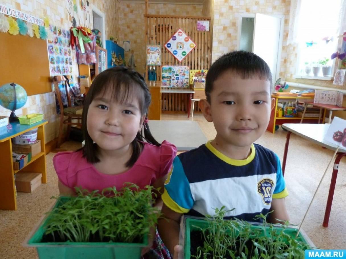 Конспект занятия «Наблюдение за ростом рассады томатов и перца» в старшей группе